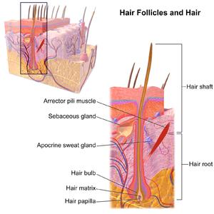 PureSkinAurora-Blog-Hair Remova